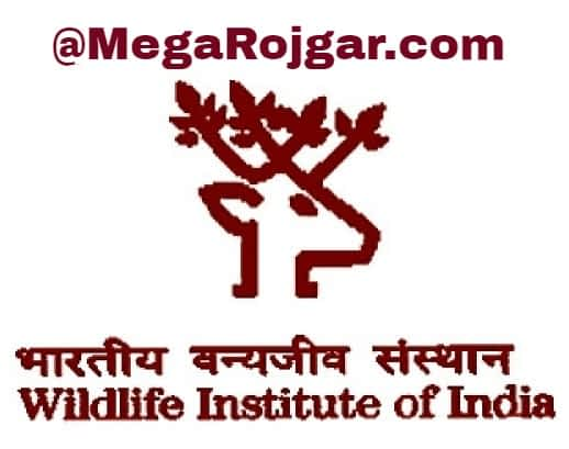 wildlife-institute-of-india-recruitment